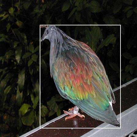 Original image before color jittering